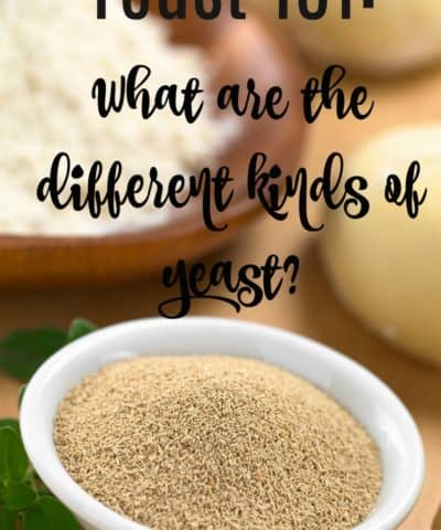 What are the different kinds of yeast?