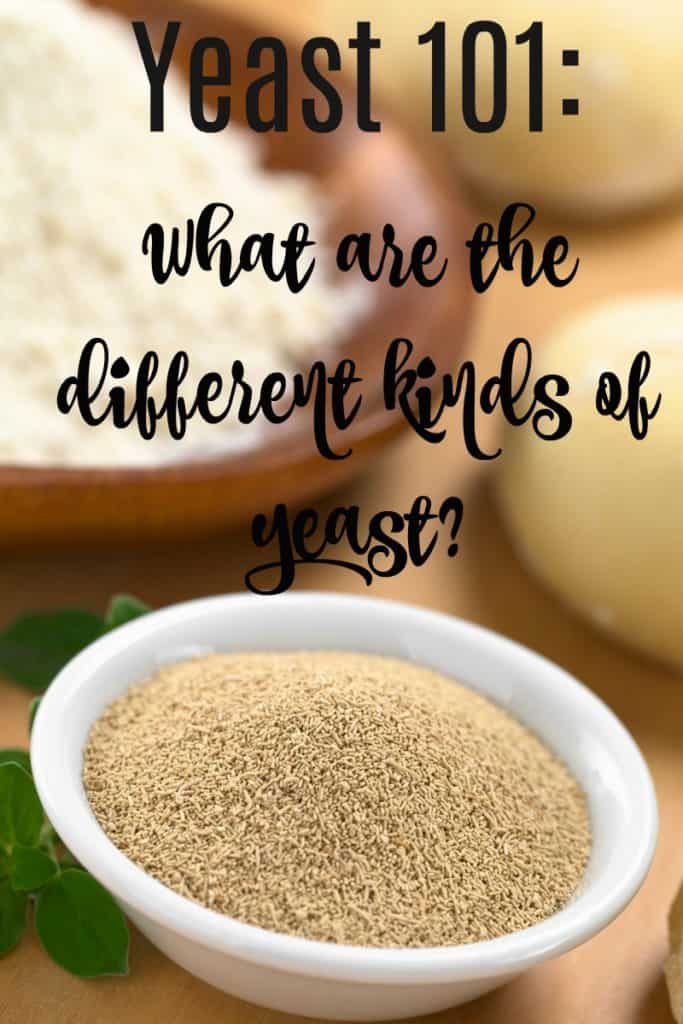 yeast 101: what are the different kinds of yeast?