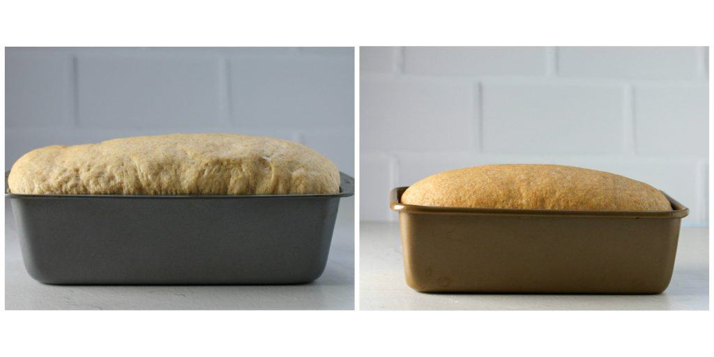 bread rising in a pan