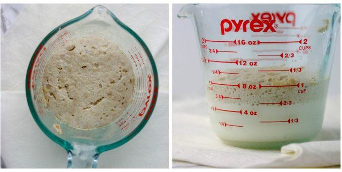 yeast proofing in a measuring cup